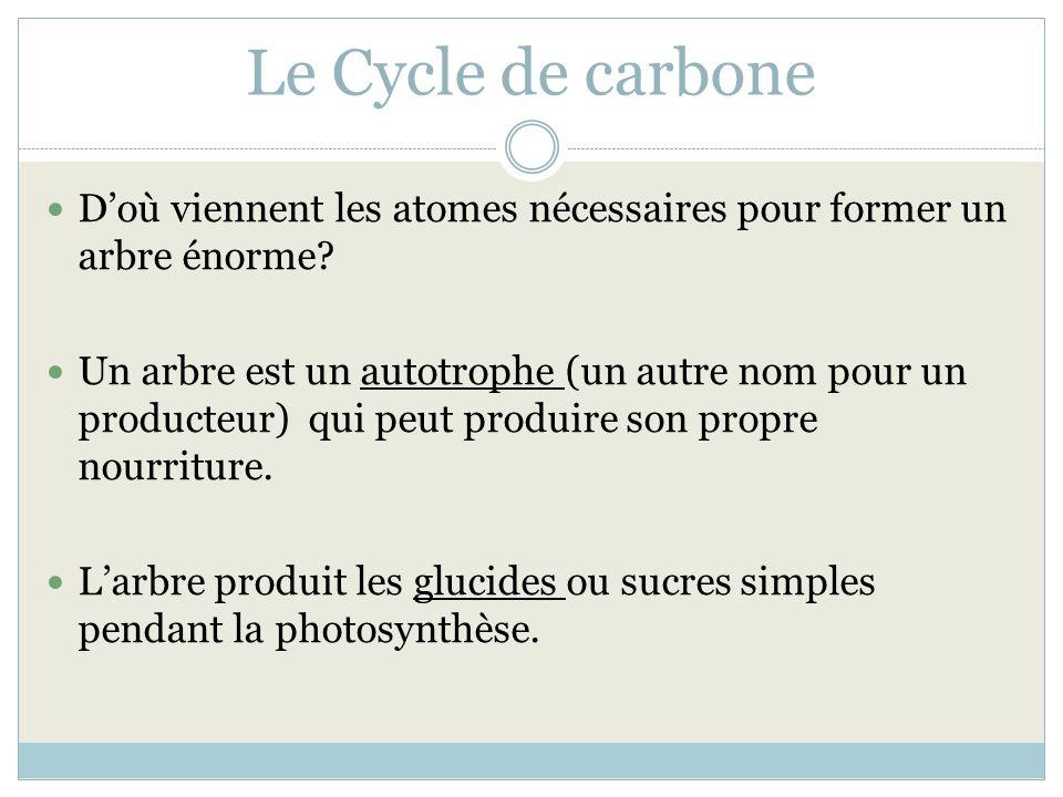 Le Cycle de carbone Doù viennent les atomes nécessaires pour former un arbre énorme? Un arbre est un autotrophe (un autre nom pour un producteur) qui