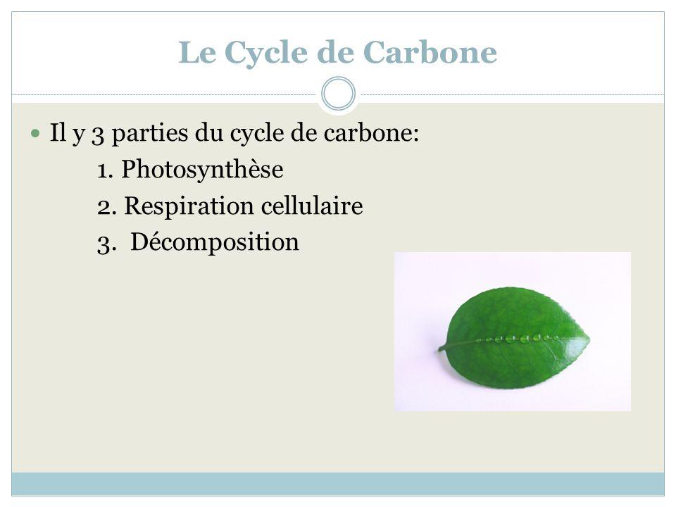 Le Cycle de Carbone Il y 3 parties du cycle de carbone: 1. Photosynthèse 2. Respiration cellulaire 3. Décomposition