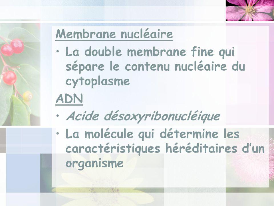 Membrane nucléaire La double membrane fine qui sépare le contenu nucléaire du cytoplasme ADN Acide désoxyribonucléique La molécule qui détermine les caractéristiques héréditaires dun organisme