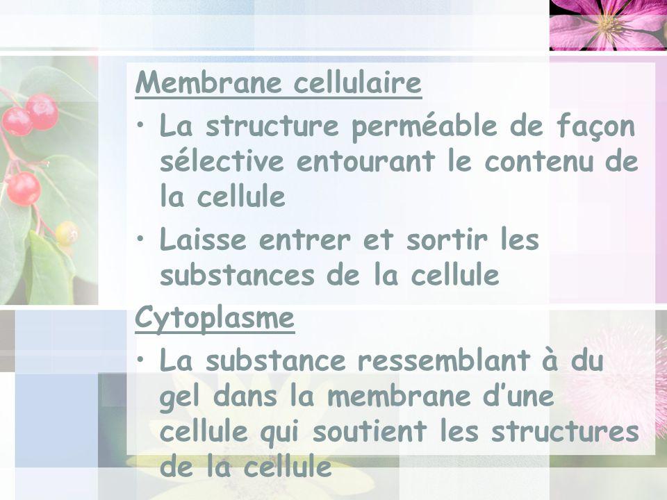 Membrane cellulaire La structure perméable de façon sélective entourant le contenu de la cellule Laisse entrer et sortir les substances de la cellule Cytoplasme La substance ressemblant à du gel dans la membrane dune cellule qui soutient les structures de la cellule
