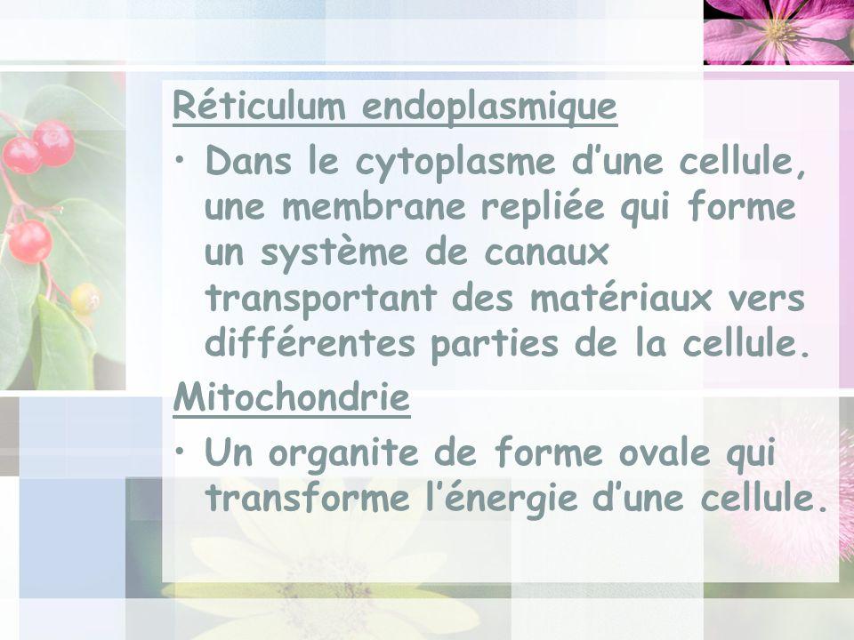 Réticulum endoplasmique Dans le cytoplasme dune cellule, une membrane repliée qui forme un système de canaux transportant des matériaux vers différentes parties de la cellule.