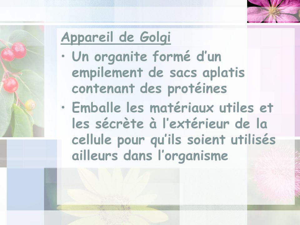Appareil de Golgi Un organite formé dun empilement de sacs aplatis contenant des protéines Emballe les matériaux utiles et les sécrète à lextérieur de la cellule pour quils soient utilisés ailleurs dans lorganisme