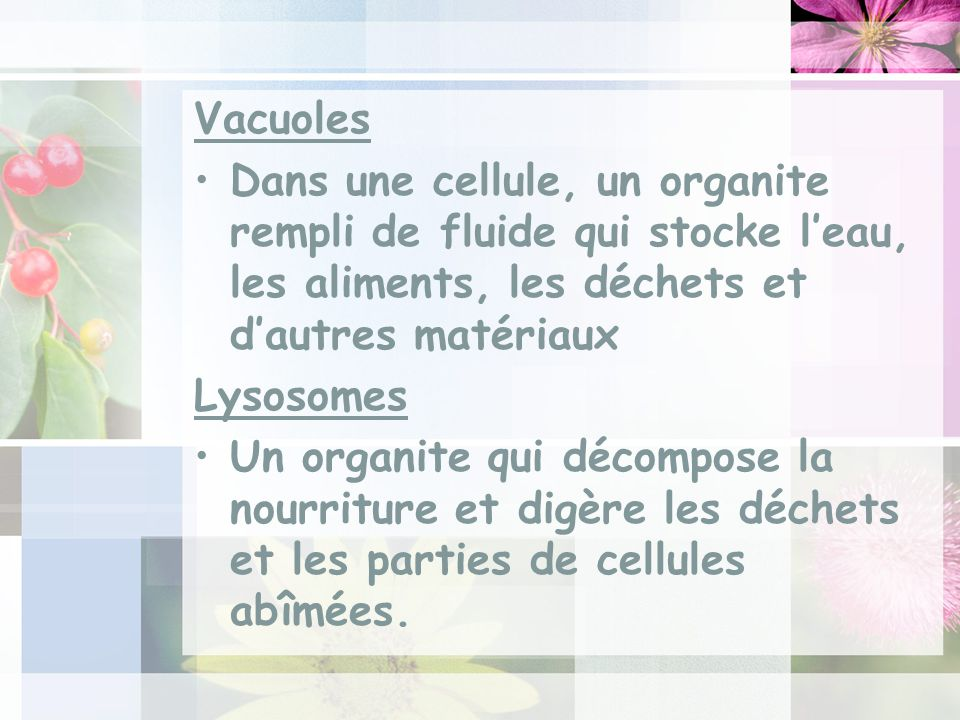 Vacuoles Dans une cellule, un organite rempli de fluide qui stocke leau, les aliments, les déchets et dautres matériaux Lysosomes Un organite qui décompose la nourriture et digère les déchets et les parties de cellules abîmées.