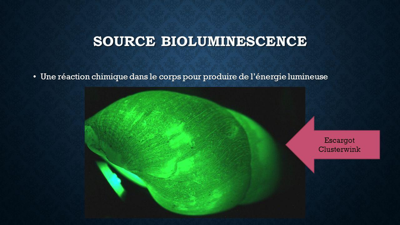 SOURCE BIOLUMINESCENCE Une réaction chimique dans le corps pour produire de lénergie lumineuse Une réaction chimique dans le corps pour produire de lénergie lumineuse Escargot Clusterwink
