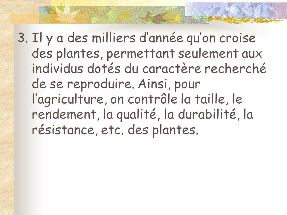 3. Il y a des milliers dannée quon croise des plantes, permettant seulement aux individus dotés du caractère recherché de se reproduire. Ainsi, pour l