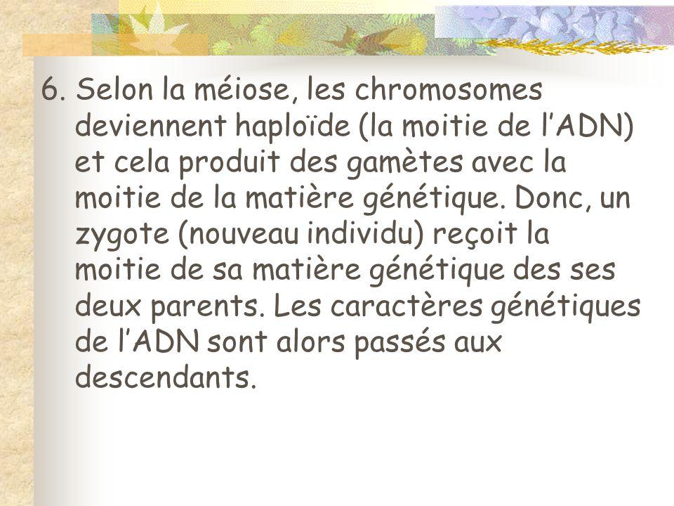 6. Selon la méiose, les chromosomes deviennent haploïde (la moitie de lADN) et cela produit des gamètes avec la moitie de la matière génétique. Donc,