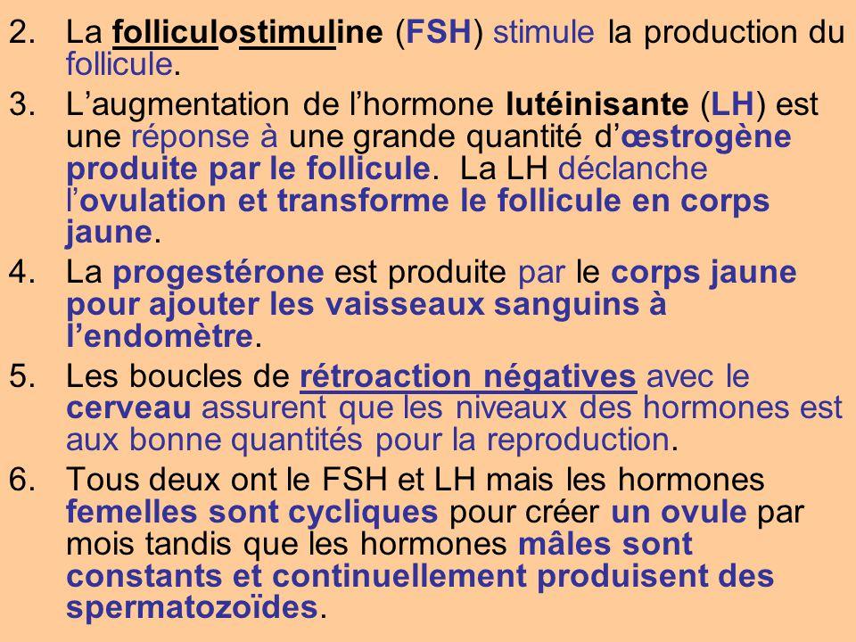2.La folliculostimuline (FSH) stimule la production du follicule. 3.Laugmentation de lhormone lutéinisante (LH) est une réponse à une grande quantité