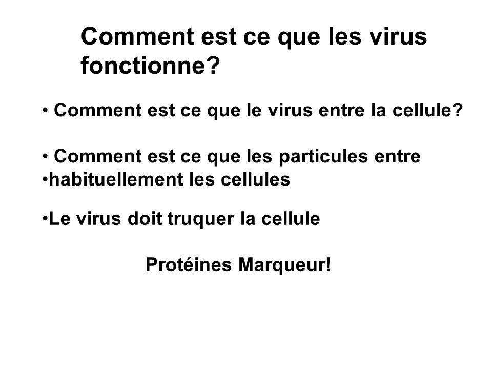 Comment est ce que les virus fonctionne.Comment est ce que le virus entre la cellule.