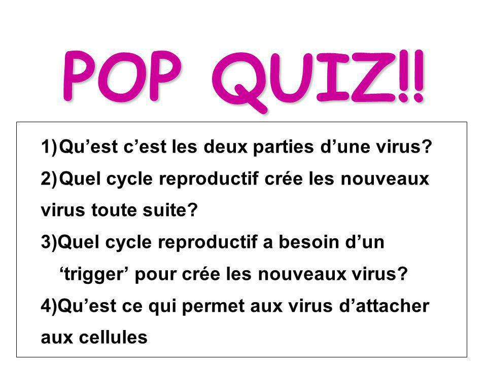 POP QUIZ!.1)Quest cest les deux parties dune virus.