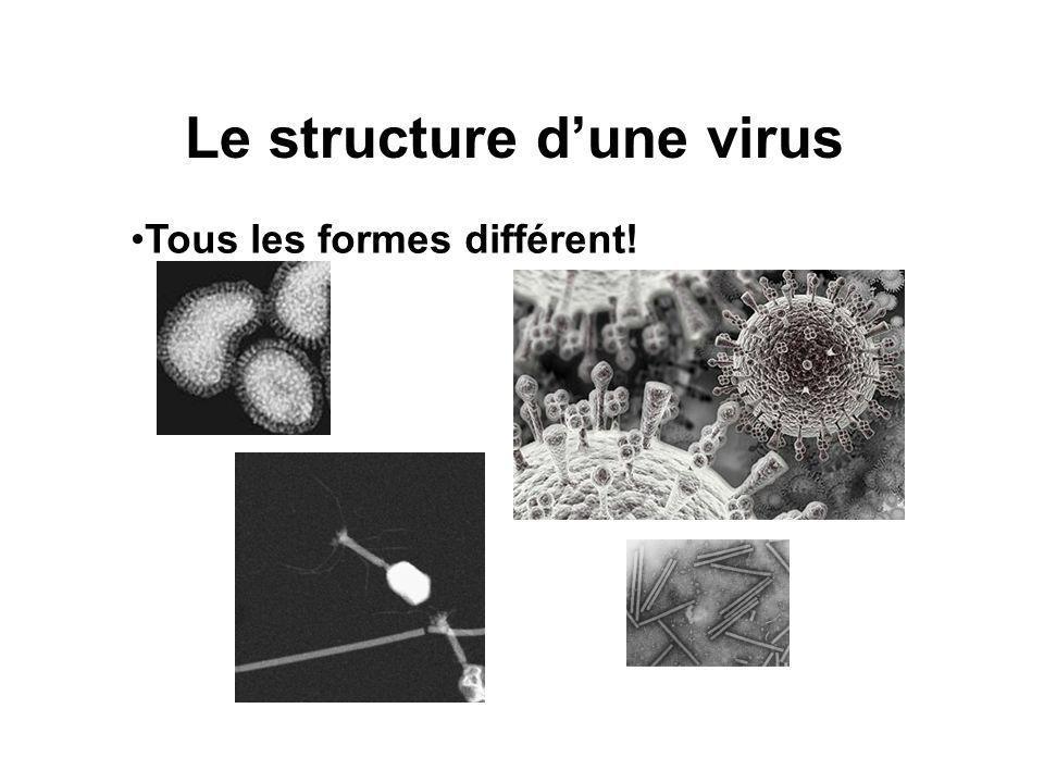 Le structure dune virus Tous les formes différent!