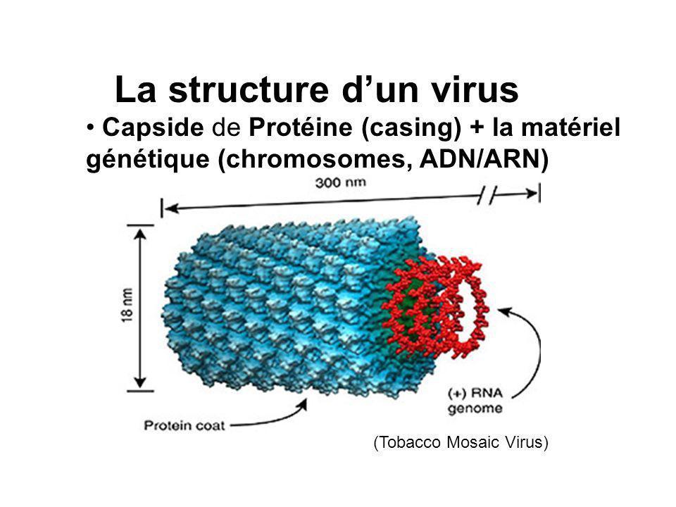 La structure dun virus Capside de Protéine (casing) + la matériel génétique (chromosomes, ADN/ARN) (Tobacco Mosaic Virus)