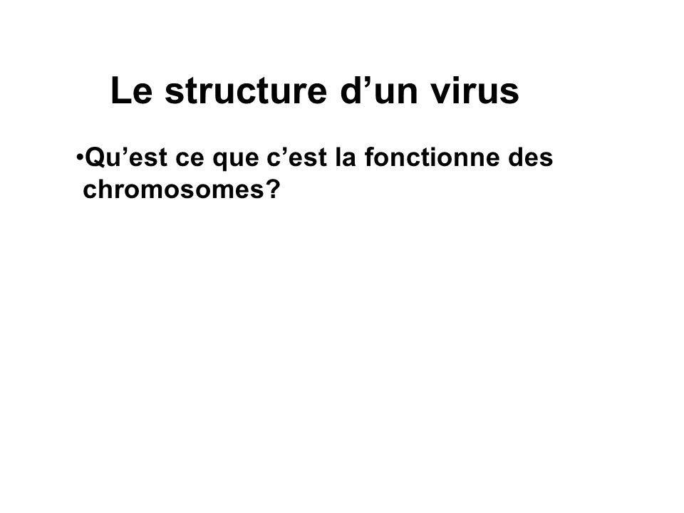 Le structure dun virus Quest ce que cest la fonctionne des chromosomes?