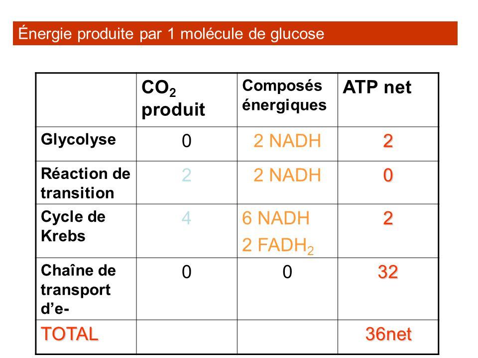 Énergie produite par 1 molécule de glucose CO 2 produit Composés énergiques ATP net Glycolyse 02 NADH2 Réaction de transition 22 NADH0 Cycle de Krebs