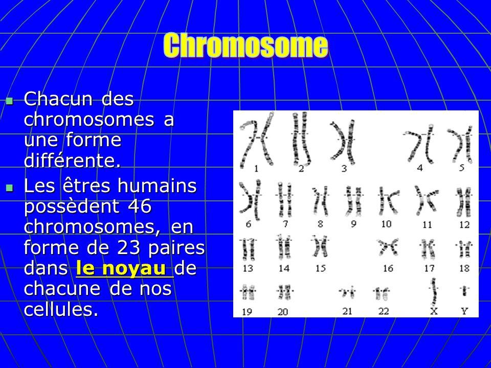 Chacun des chromosomes a une forme différente. Chacun des chromosomes a une forme différente. Les êtres humains possèdent 46 chromosomes, en forme de