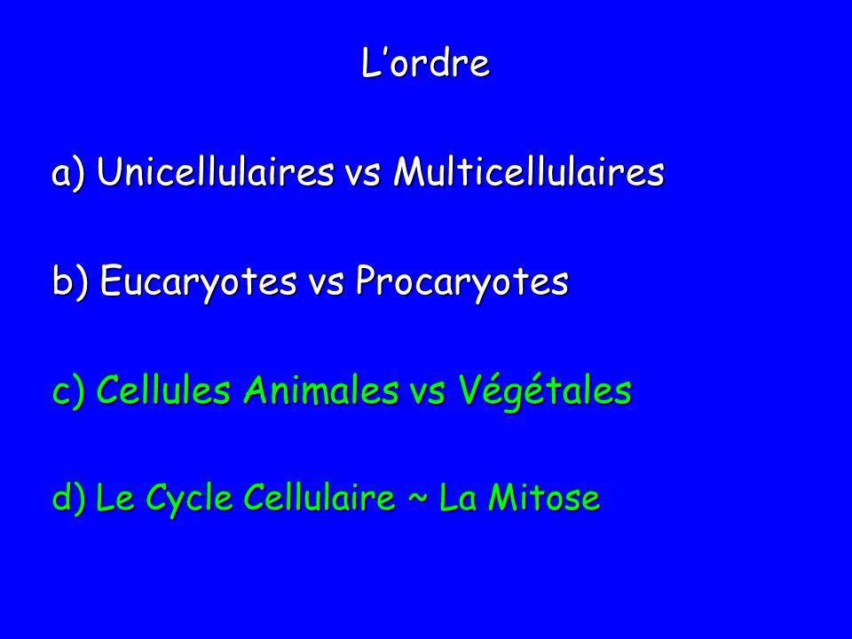 Lordre a) Unicellulaires vs Multicellulaires b) Eucaryotes vs Procaryotes c) Cellules Animales vs Végétales d) Le Cycle Cellulaire ~ La Mitose