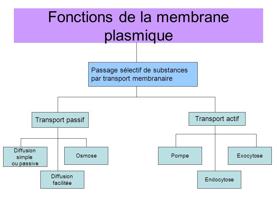 Fonctions de la membrane plasmique Passage sélectif de substances par transport membranaire Transport passif Transport actif Diffusion simple ou passive Diffusion facilitée OsmosePompe Endocytose Exocytose