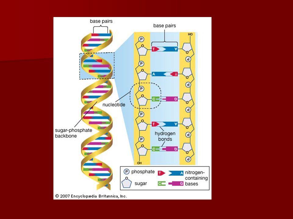 Hydrolyse Processus par laquelle on coupe les grandes polymères ou macromolécules en monomères avec laddition de leau.
