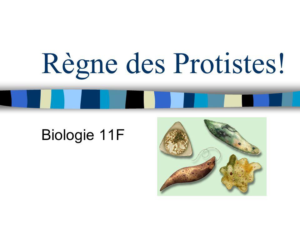 Règne des Protistes! Biologie 11F