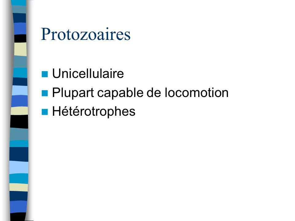 Protozoaires Unicellulaire Plupart capable de locomotion Hétérotrophes
