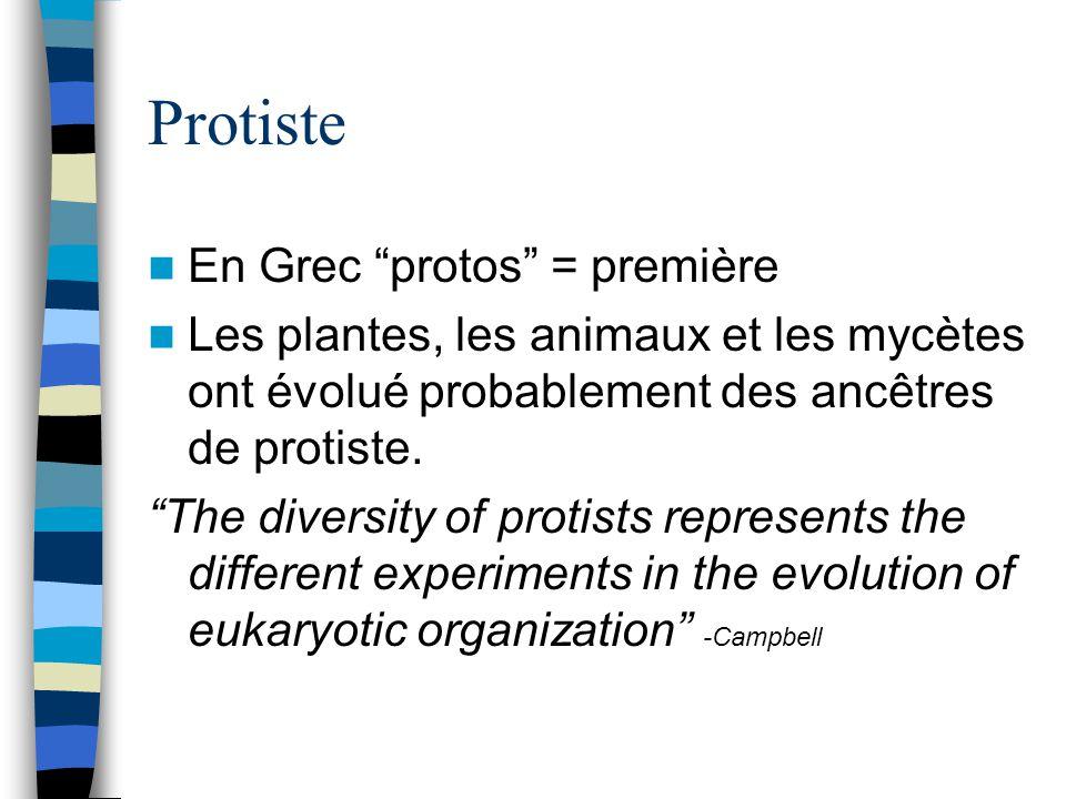 Protiste En Grec protos = première Les plantes, les animaux et les mycètes ont évolué probablement des ancêtres de protiste. The diversity of protists