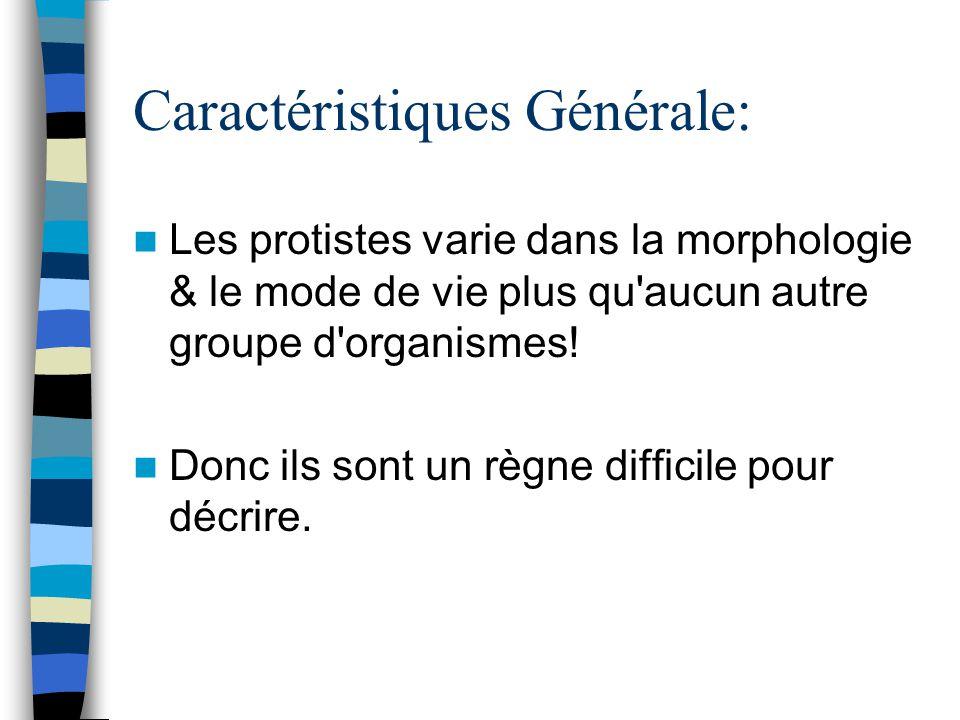 Caractéristiques Générale: Les protistes varie dans la morphologie & le mode de vie plus qu'aucun autre groupe d'organismes! Donc ils sont un règne di