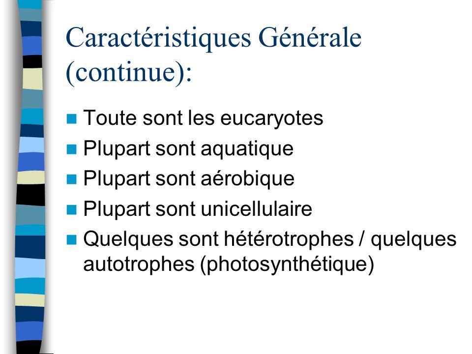 Caractéristiques Générale (continue): Toute sont les eucaryotes Plupart sont aquatique Plupart sont aérobique Plupart sont unicellulaire Quelques sont