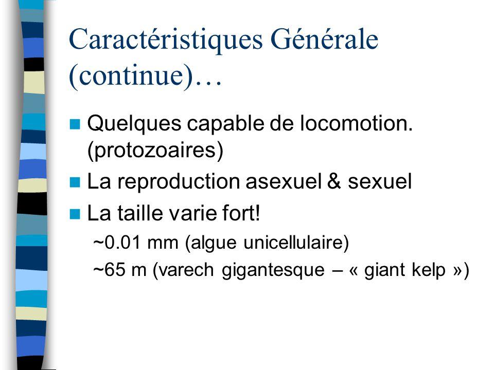 Caractéristiques Générale (continue)… Quelques capable de locomotion. (protozoaires) La reproduction asexuel & sexuel La taille varie fort! ~0.01 mm (