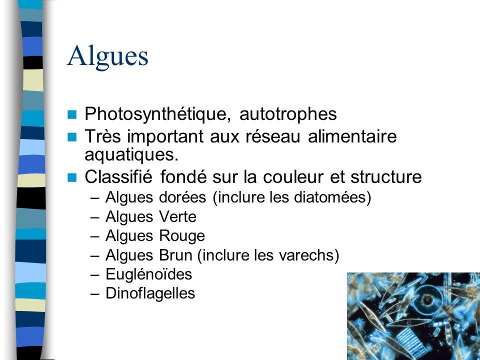 Algues Photosynthétique, autotrophes Très important aux réseau alimentaire aquatiques. Classifié fondé sur la couleur et structure –Algues dorées (inc
