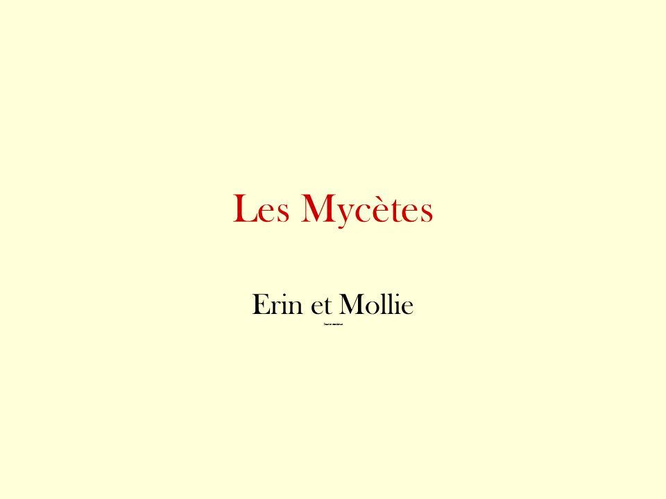 Les Mycètes Erin et Mollie Sont les meilleurs