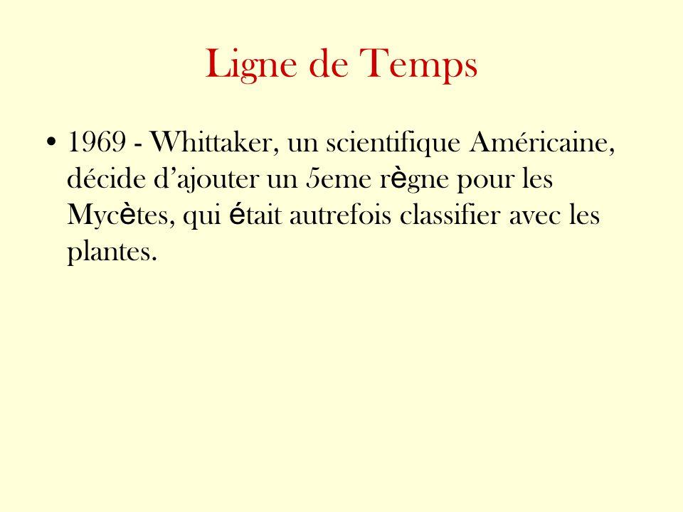 Ligne de Temps 1969 - Whittaker, un scientifique Américaine, décide dajouter un 5eme r è gne pour les Myc è tes, qui é tait autrefois classifier avec