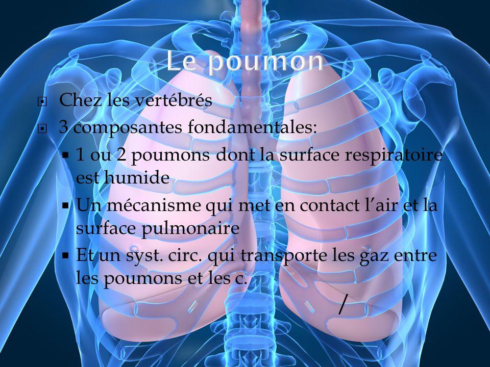 Chez les vertébrés 3 composantes fondamentales: 1 ou 2 poumons dont la surface respiratoire est humide Un mécanisme qui met en contact lair et la surf