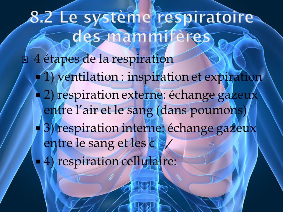4 étapes de la respiration 1) ventilation : inspiration et expiration 2) respiration externe: échange gazeux entre lair et le sang (dans poumons) 3) r