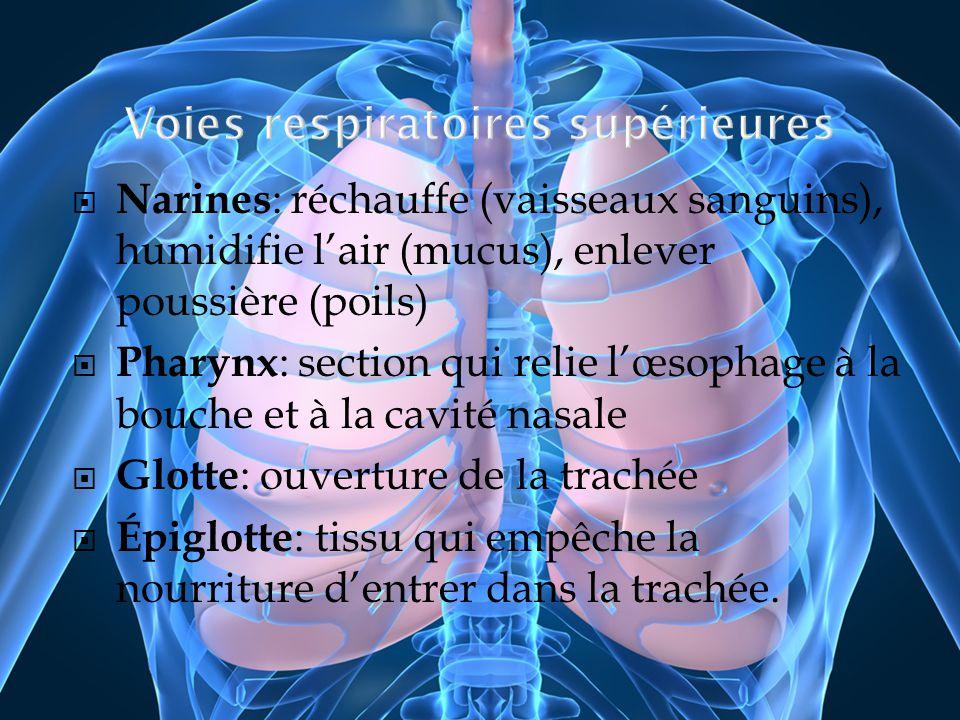 Narines : réchauffe (vaisseaux sanguins), humidifie lair (mucus), enlever poussière (poils) Pharynx : section qui relie lœsophage à la bouche et à la