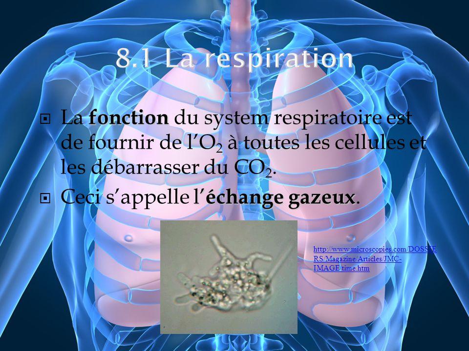 fonction La fonction du system respiratoire est de fournir de lO 2 à toutes les cellules et les débarrasser du CO 2. l échange gazeux Ceci sappelle l