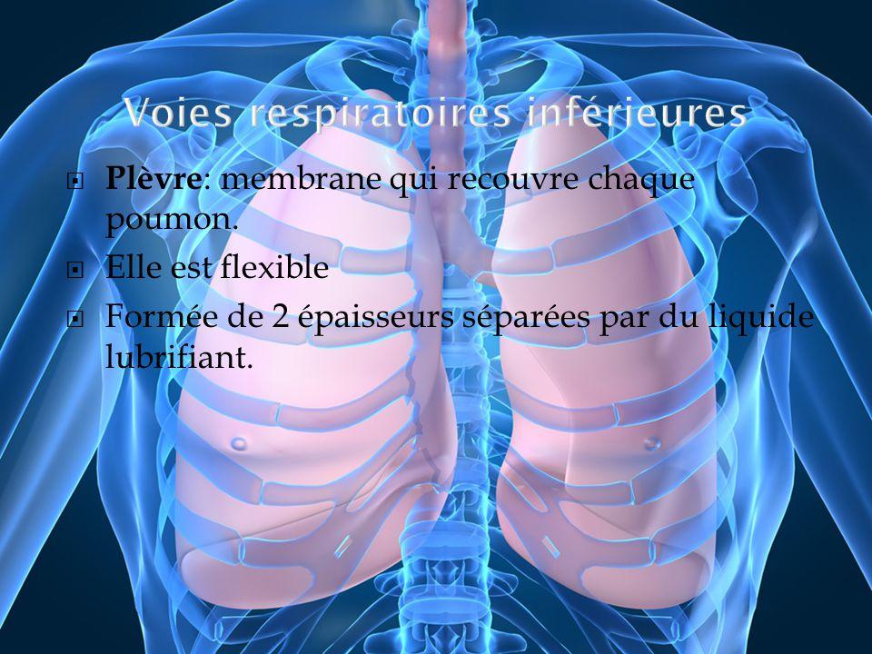 Plèvre : membrane qui recouvre chaque poumon. Elle est flexible Formée de 2 épaisseurs séparées par du liquide lubrifiant.