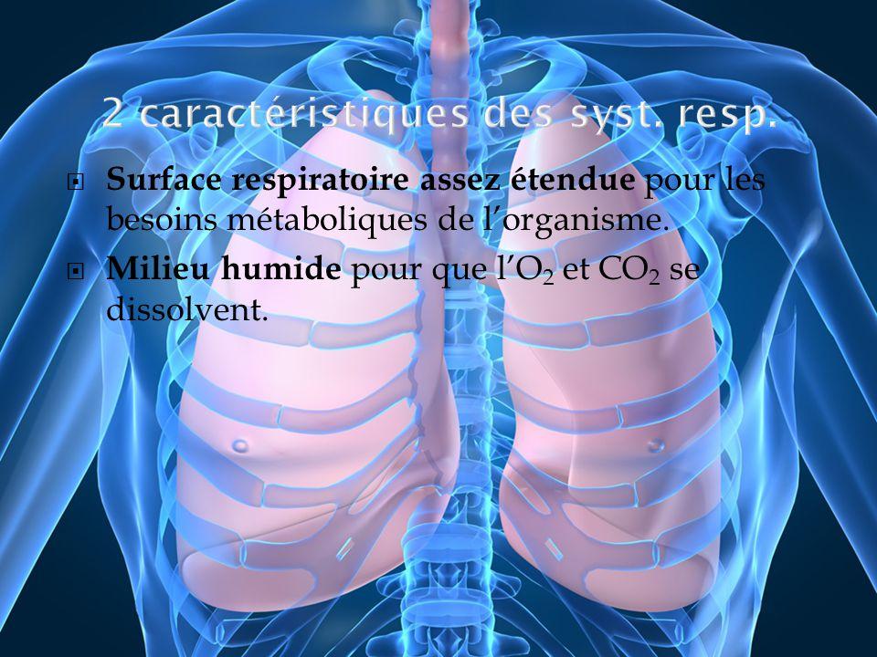 Surface respiratoire assez étendue pour les besoins métaboliques de lorganisme. Milieu humide pour que lO 2 et CO 2 se dissolvent.
