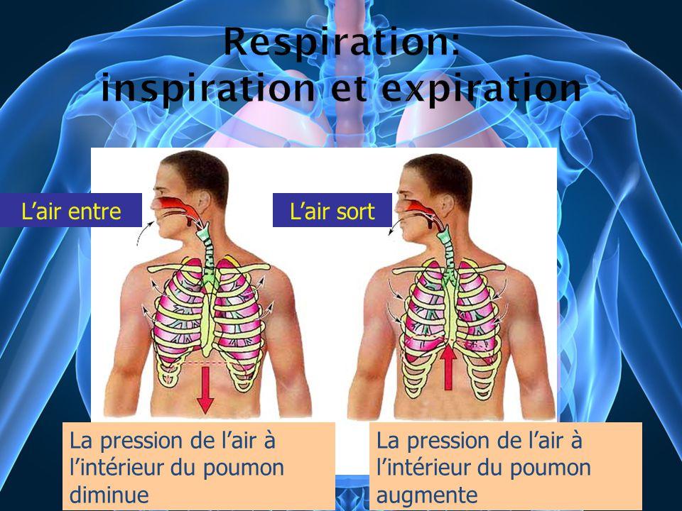 Lair entreLair sort La pression de lair à lintérieur du poumon diminue La pression de lair à lintérieur du poumon augmente