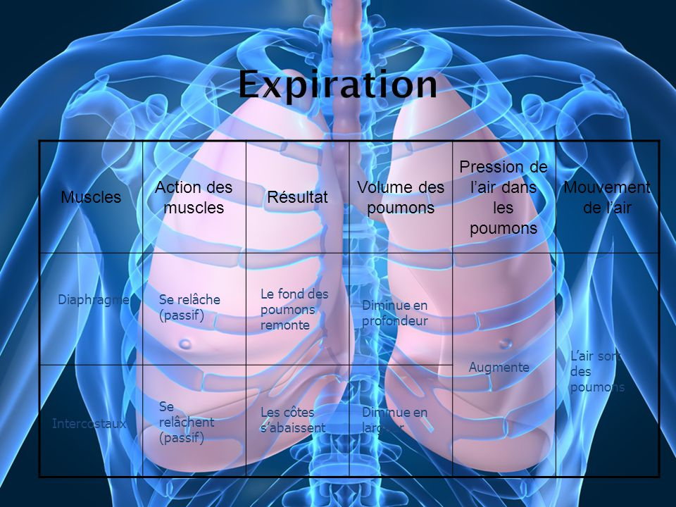 Muscles Action des muscles Résultat Volume des poumons Pression de lair dans les poumons Mouvement de lair DiaphragmeSe relâche (passif) Le fond des p