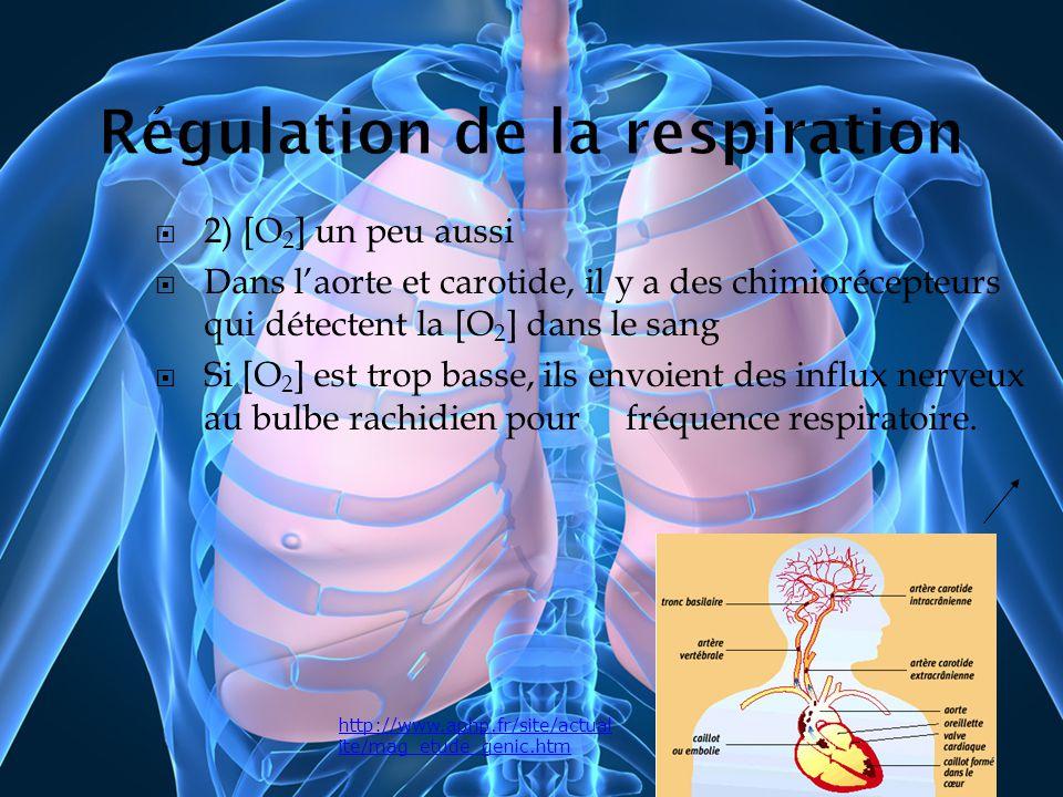 2) [O 2 ] un peu aussi Dans laorte et carotide, il y a des chimiorécepteurs qui détectent la [O 2 ] dans le sang Si [O 2 ] est trop basse, ils envoien