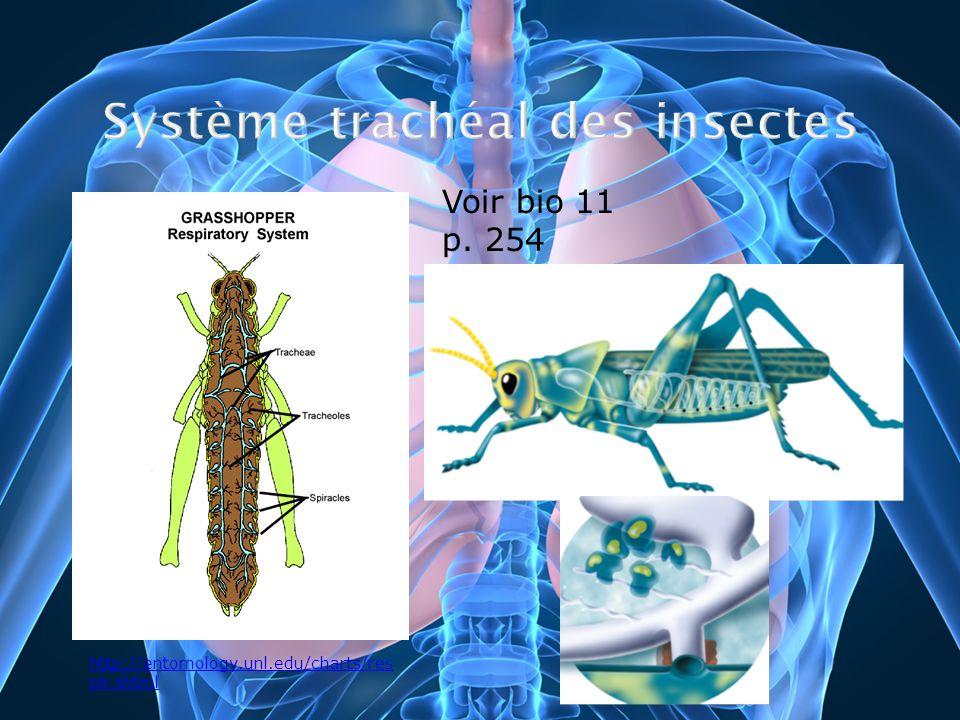 http://entomology.unl.edu/charts/res pir.shtml Voir bio 11 p. 254