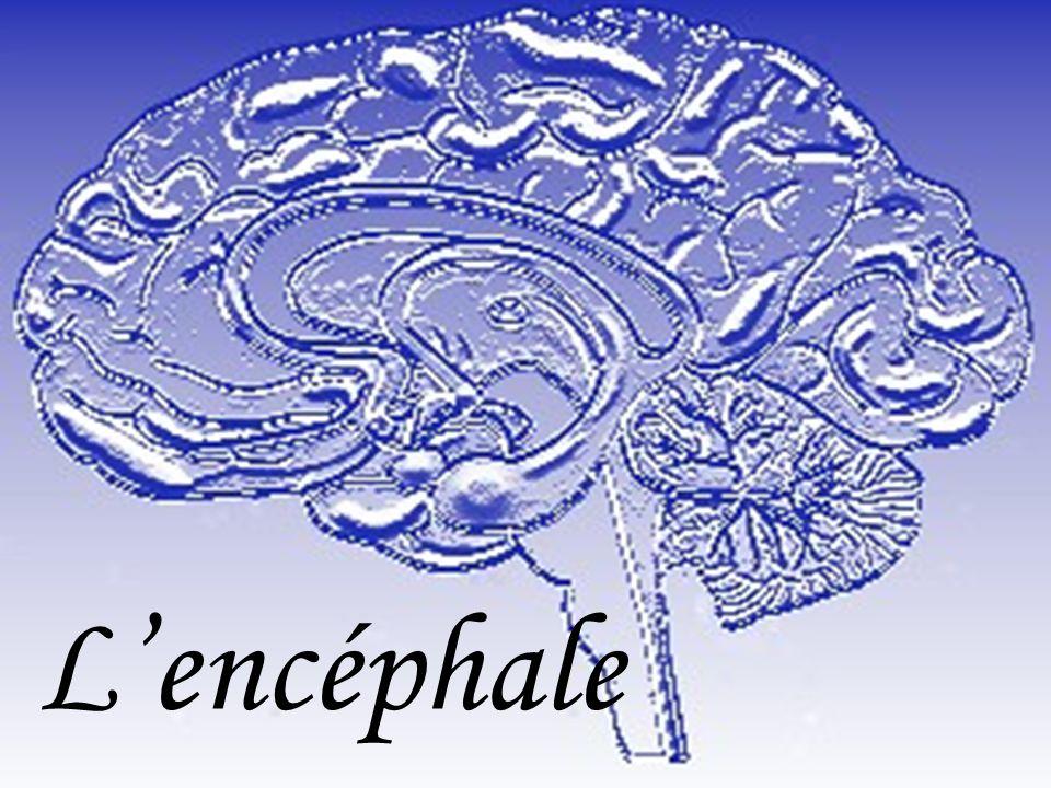 Lencéphale