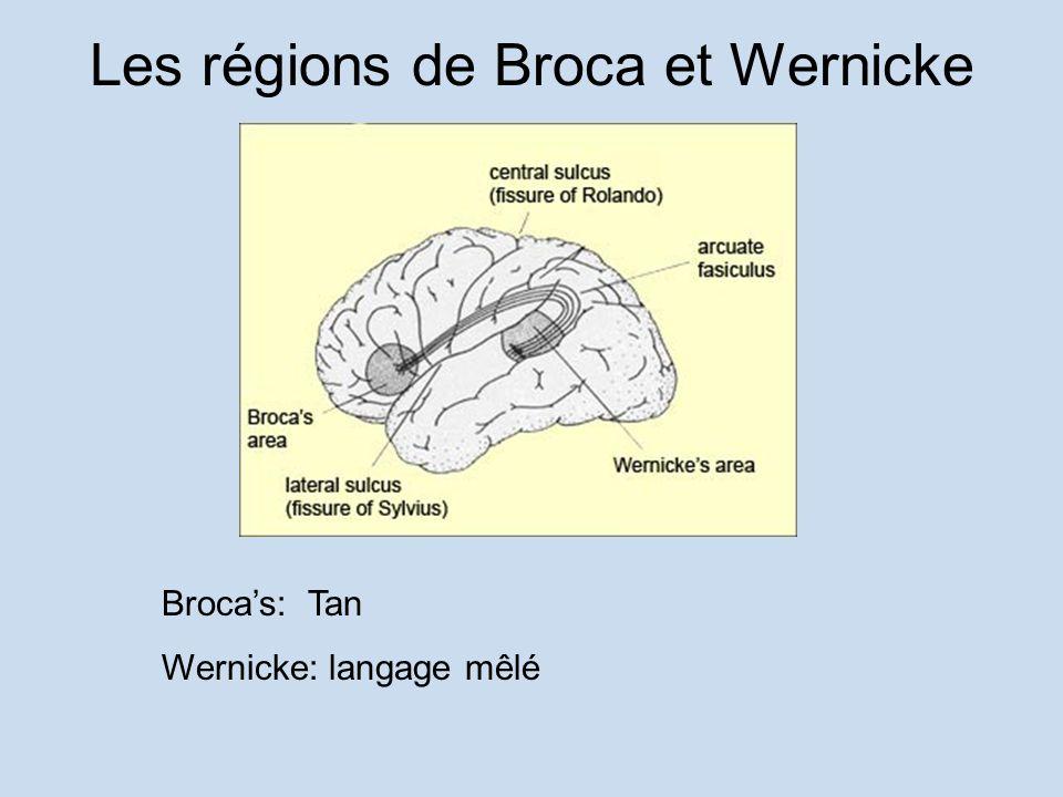 Les régions de Broca et Wernicke Brocas: Tan Wernicke: langage mêlé
