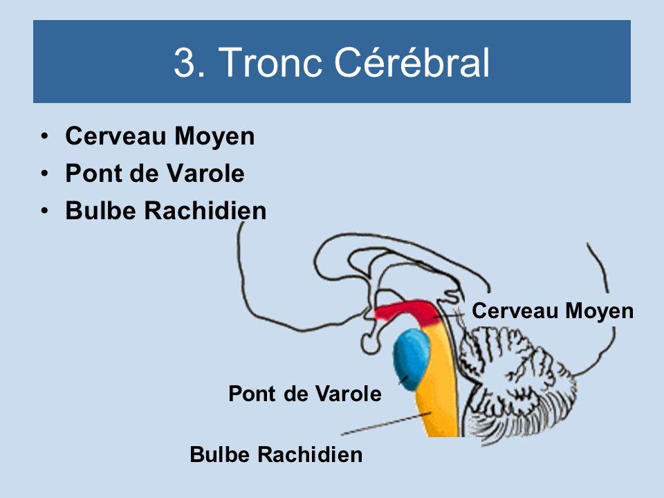 3. Tronc Cérébral Cerveau Moyen Pont de Varole Bulbe Rachidien Cerveau Moyen Pont de Varole Bulbe Rachidien