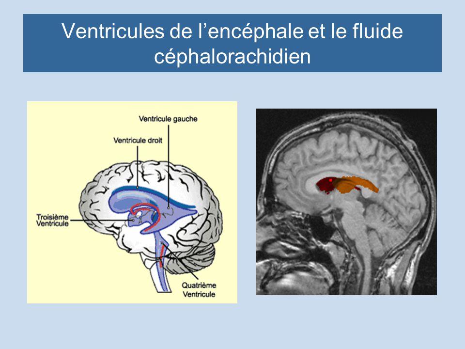 Ventricules de lencéphale et le fluide céphalorachidien