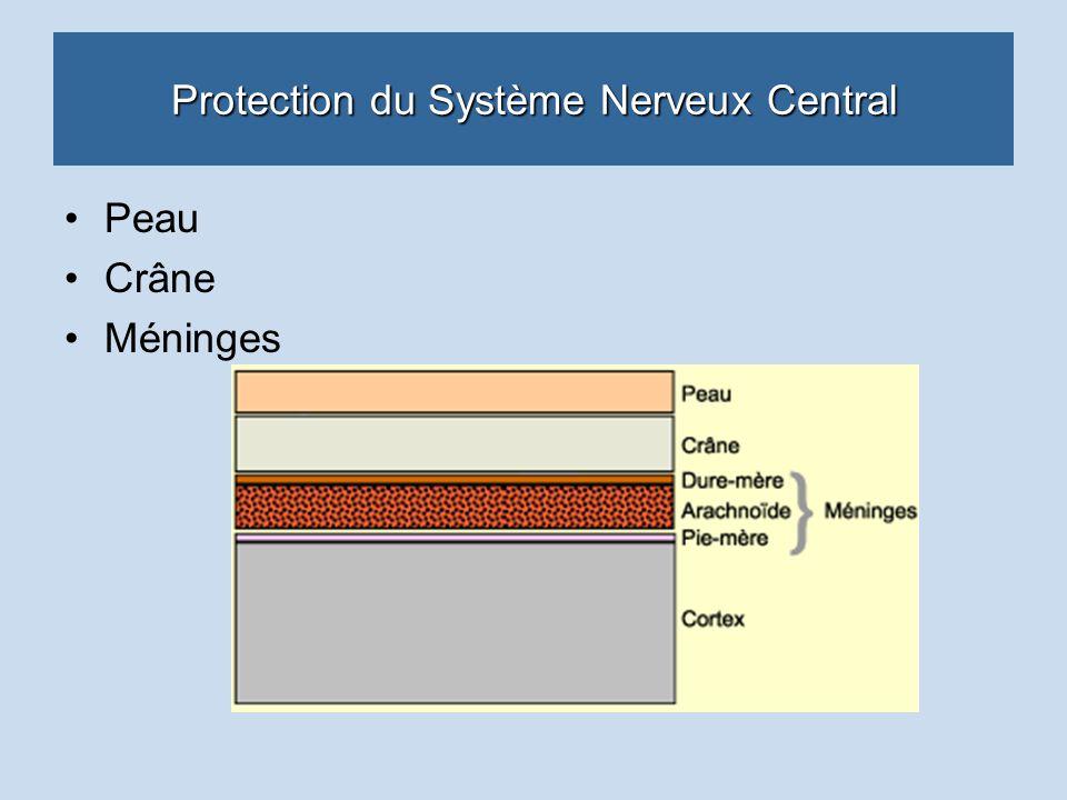 Protection du Système Nerveux Central Peau Crâne Méninges
