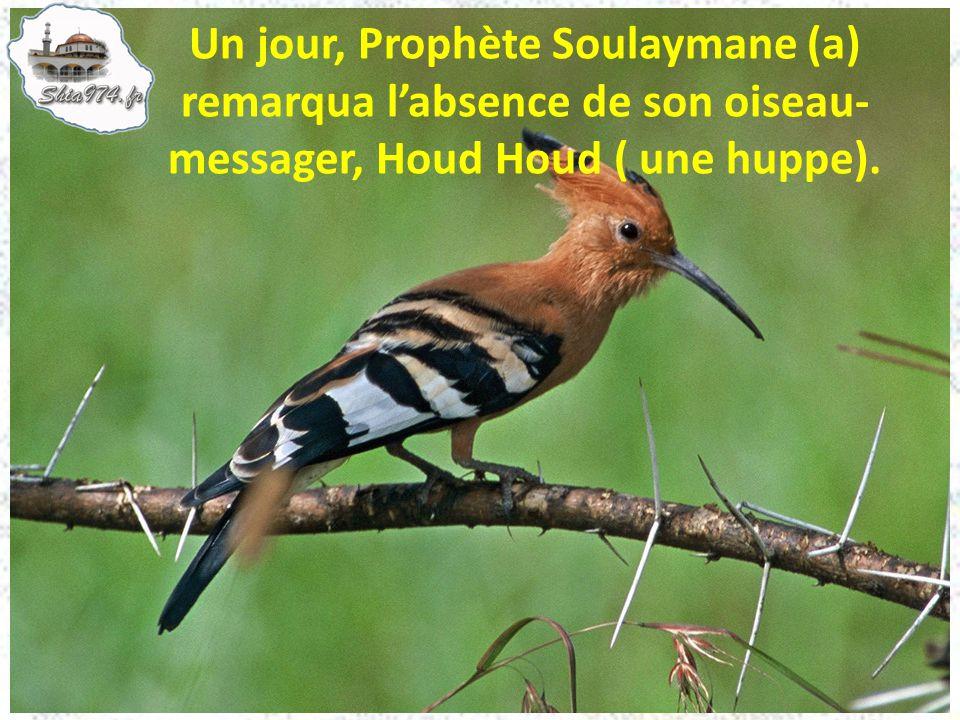 Un jour, Prophète Soulaymane (a) remarqua labsence de son oiseau- messager, Houd Houd ( une huppe).