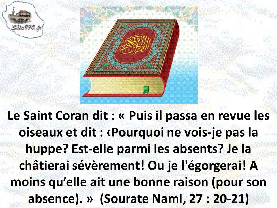 Le Saint Coran dit : « Puis il passa en revue les oiseaux et dit : Pourquoi ne vois-je pas la huppe? Est-elle parmi les absents? Je la châtierai sévèr