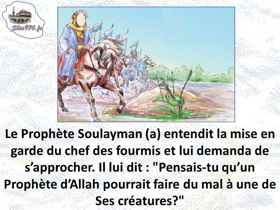 Le Prophète Soulayman (a) entendit la mise en garde du chef des fourmis et lui demanda de sapprocher. Il lui dit :