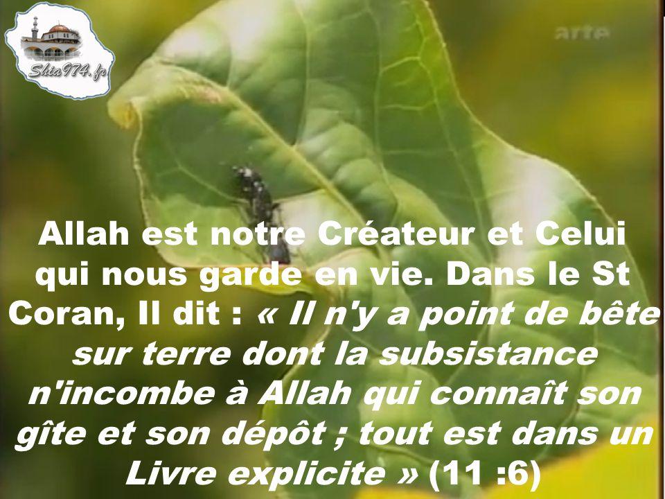 Allah est notre Créateur et Celui qui nous garde en vie. Dans le St Coran, Il dit : « Il n'y a point de bête sur terre dont la subsistance n'incombe à