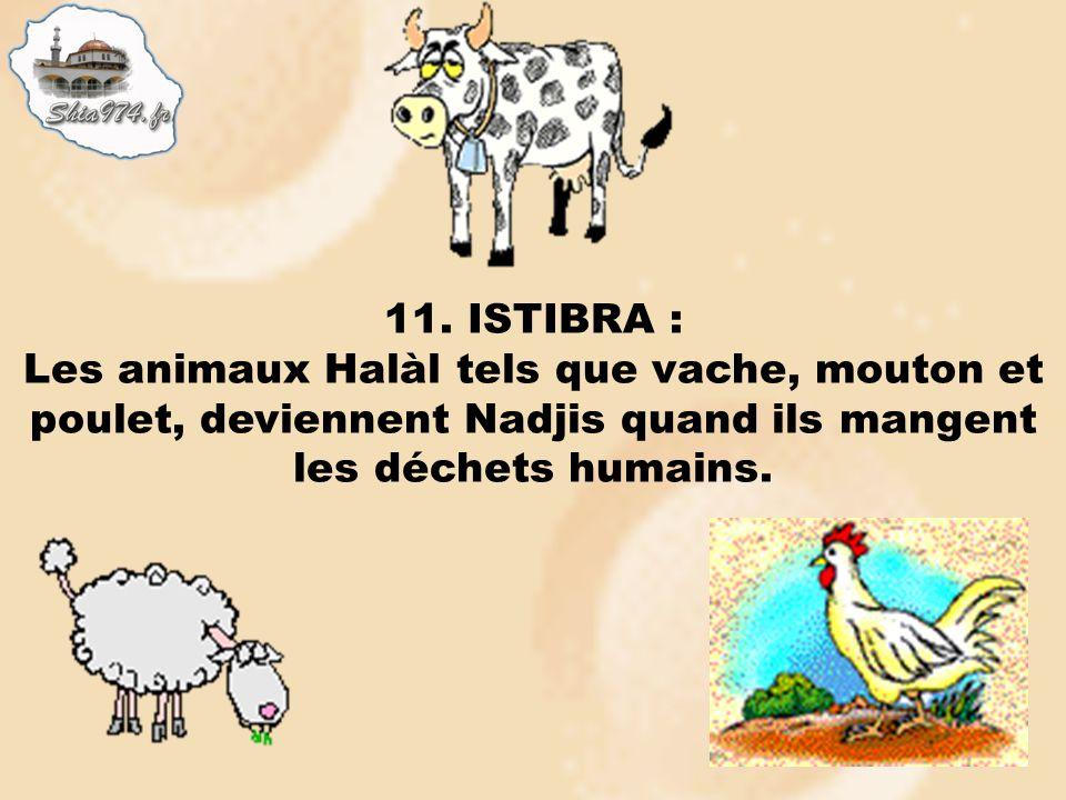 11. ISTIBRA : Les animaux Halàl tels que vache, mouton et poulet, deviennent Nadjis quand ils mangent les déchets humains.